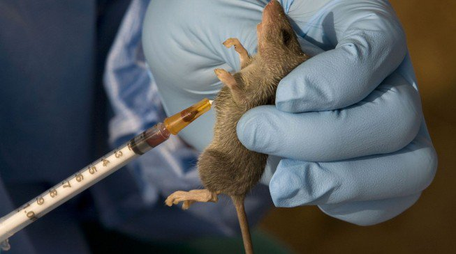 Kogi confirms 4 cases of Lassa fever