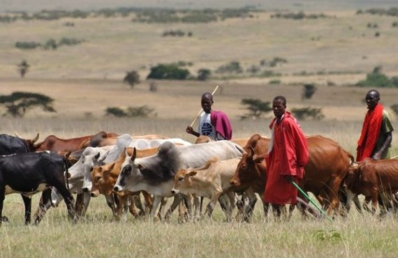 'Is cattle trade FG business?' — Reactions trail Ruga settlement