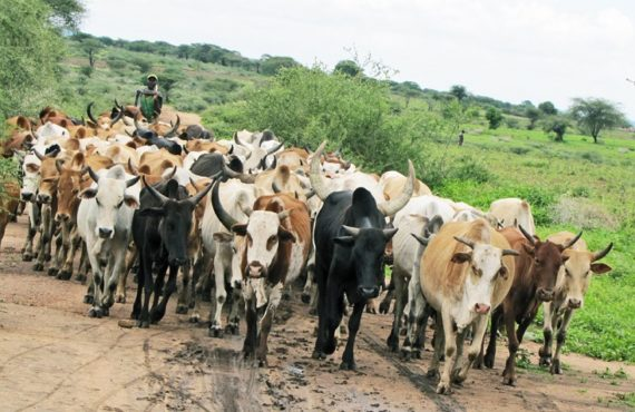 Ruga initiative suspended