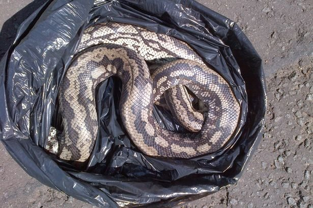 43 poisonous snakes found in man's luggage at Vienna airport