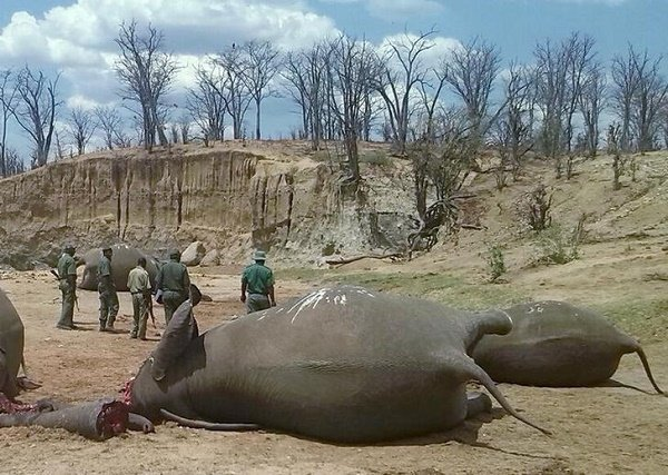 Zimbabwe's largest natural reserve loses 55 elephants to hunger, thirst