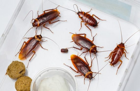 10 ways to get rid of cockroaches using home remedies