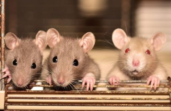 How it spreads, symptoms, treatment... all you should know about hantavirus