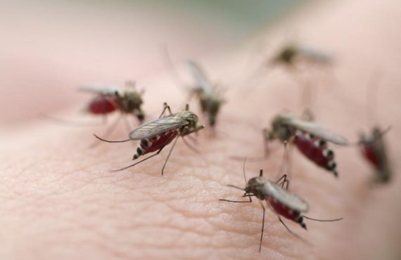 How vaccine made of mosquito spit could protect people from…