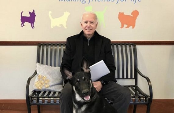 Biden's dog set to become first canine from animal shelter to live in White House