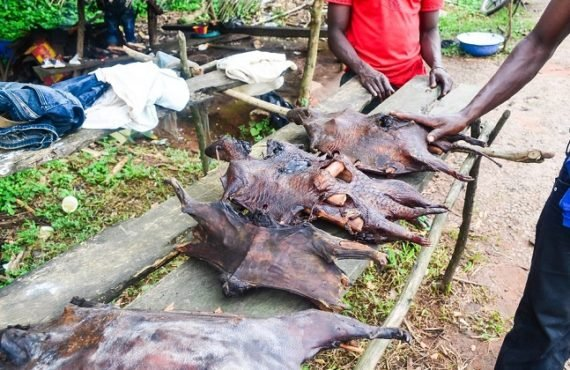 New survey shows widespread consumption of 'bush meat' in Nigeria